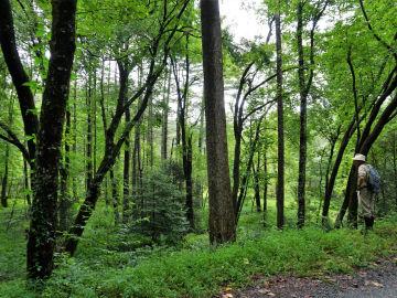 Dupont State Recreational Forest, Carolina del Norte, Estados Unidos
