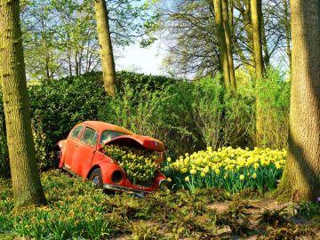 Flores en Holanda